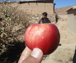 090326_apple_4