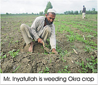 110428_weeding_okra_srop