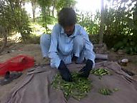 110519_2_mr_mazullah_is_doing_gradi