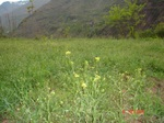 Unicef_jpf3_jpf4_200744_spring_view_2_1