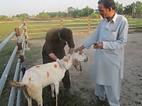 120906_assists_veterinary_assista_2