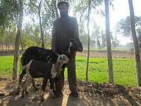 130131_a_goat_and_baby_goat_both_ar