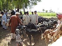 130509_bargaining_at_goat_market