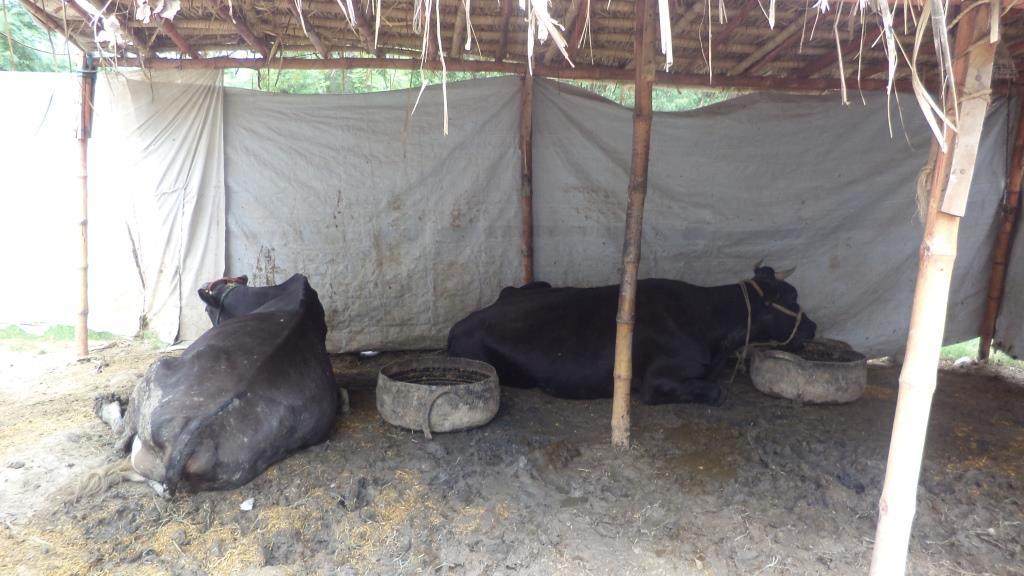 20150827_pk_02_shelter2