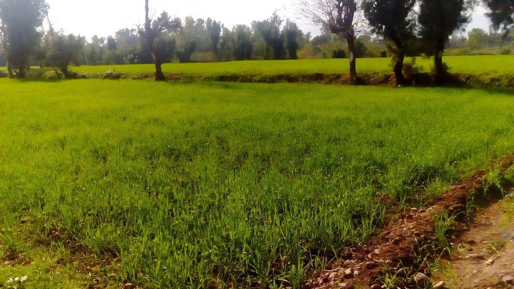 20160812_pk_01_agriculture_fieldj_2