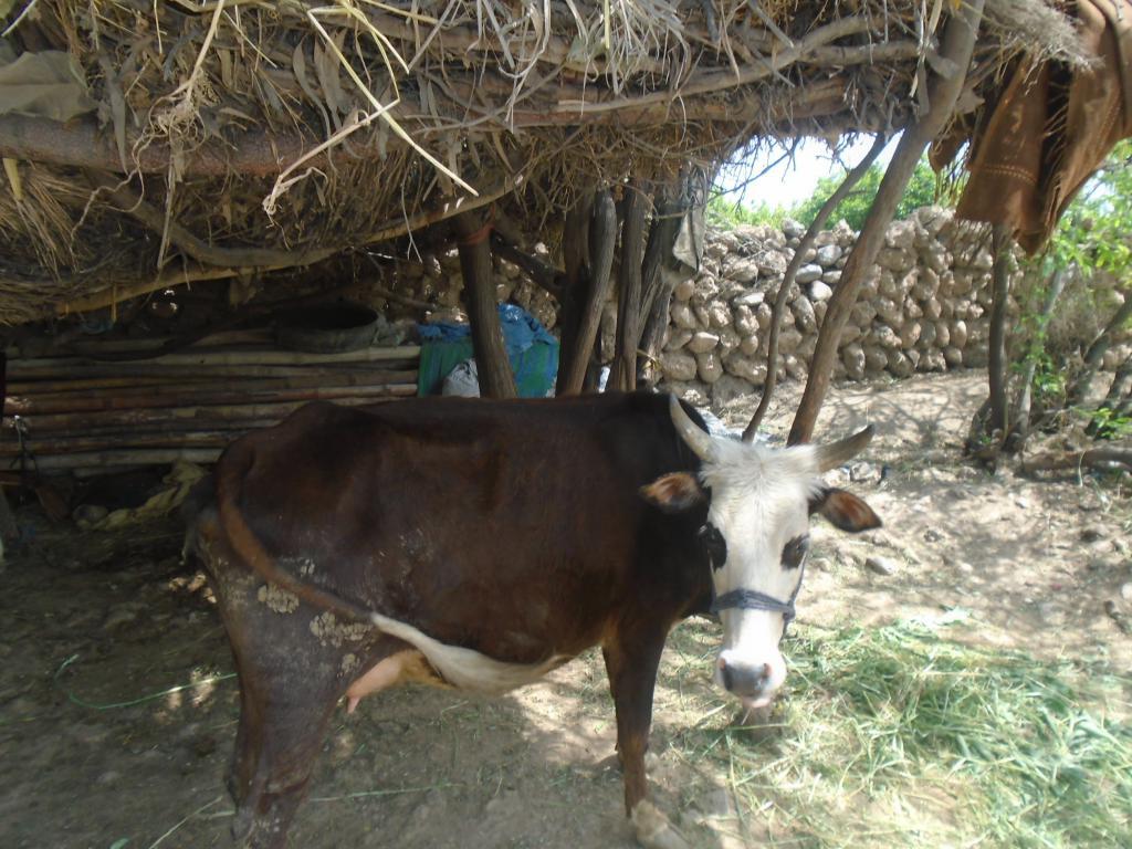 20170427_pk_the_widows_cow