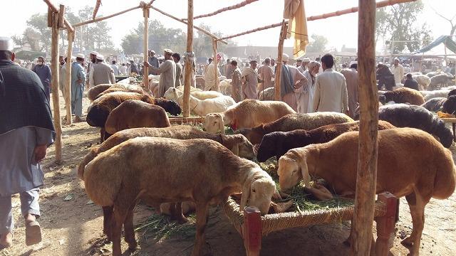 20171102_pk_02_sheeps